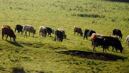 Молочная кооперация: быть или нет? Или о доступе к финансам и другим сдерживающим факторам