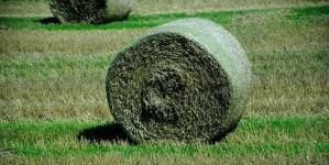 IFC советуется с сельхозпроизводителями о путях реформирования украинского агрострахования