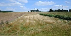 Нові електронні послуги у земельній сфері: відкриття інформації про власників земельних ділянок та замовлення витягу про нормативну грошову оцінку