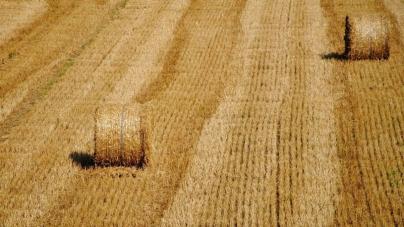 Експерти розповіли, що є ключовими напрямками розвитку української аграрної галузі
