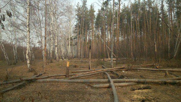 Реформа лісової галузі повністю провалена