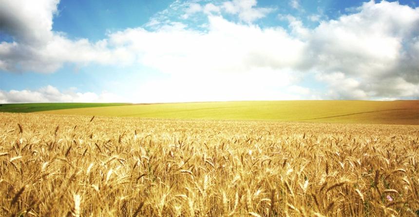Экспорт украинской агропродукции увеличился