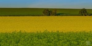Мораторій на продаж земель сільськогосподарського призначення буде продовжено на один рік