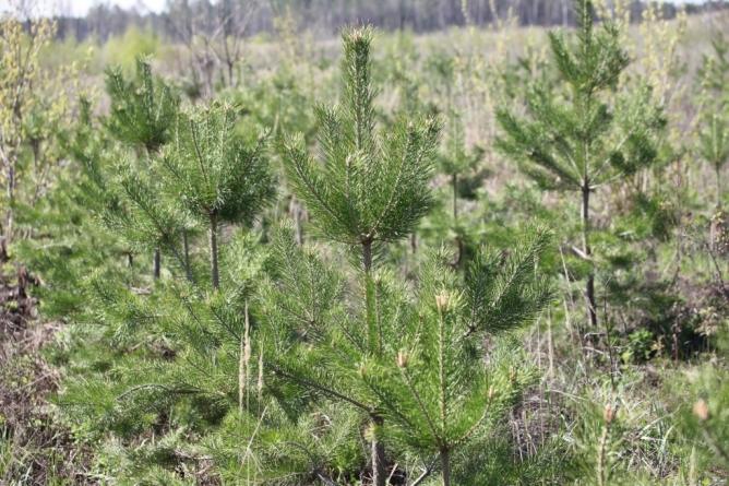 Голосеевский парк высадит 10 000 деревьев