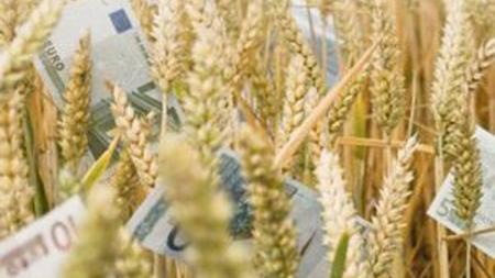 Аграрии привлекли 845 млн грн благодаря кредитам IFC