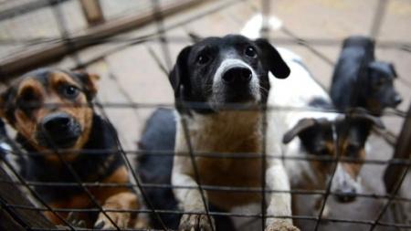 Пси рознюхують роботу: Бородянський притулок працевлаштовує своїх цуценят