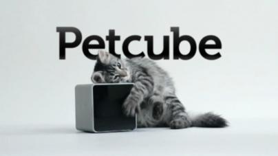 Украинская компания Petcube купила систему автокормления животных PetBot