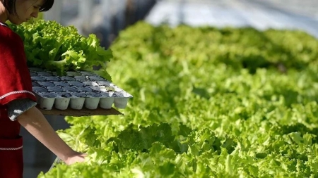Минагропрод надеется на принятие Радой закона об органической продукции