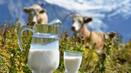 Цікаво! Яке молоко краще? — думка експерта