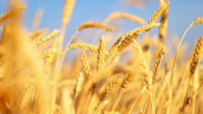 Доходность продукции растениеводства в Украине сократится почти вдвое – эксперт