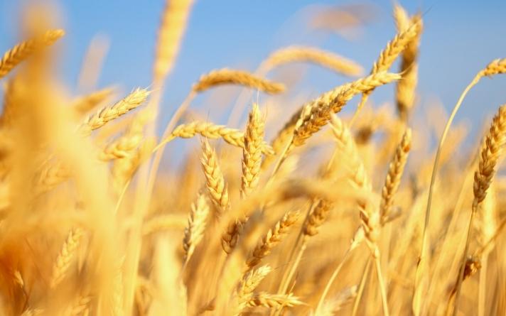 Доходность продукции растениеводства в Украине сократится почти вдвое — эксперт