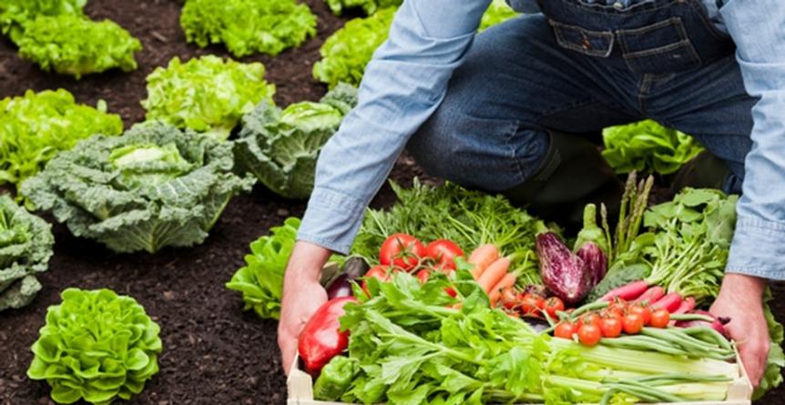 Органические производители получат прямой доступ к европейским покупателям