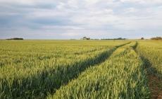 Германия внедряет в Украине аграрных проектов на €10 млн
