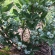 Бизнес по выращиванию органических ягод голубики, малины, клубники