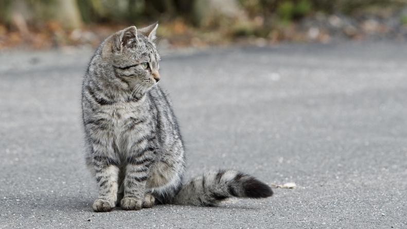 Осторожно: животные на дороге