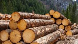 Деревообрабатывающее производство в Карпатах