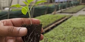 Украина получит $200 млн. от Всемирного банка на сельское хозяйство