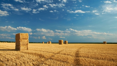 Проведення інвентаризації земель сільськогосподарського призначення державної власності