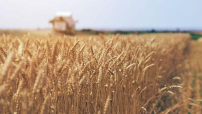 Аграрні розписки – це можливість подбати про розвиток свого господарства