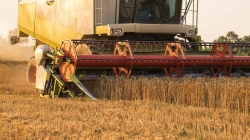 На пшеничному полі під Києвом з'явилася гігантська фігура!