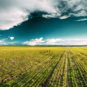 До 21 вересня інвентаризацію земель сільськогосподарського призначення буде завершено у 8 областях