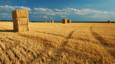 АМУ просить Президента не допустити нівелювання здобутків реформ та забезпечити права громад на отримання земель сільгосппризначення