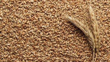 Экспорт украинского зерна отстает от прошлогоднего на 2,2 млн тонн