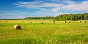 Держгеокадастр передав територіальним громадам у комунальну власність 2 млн га земель сільськогосподарського призначення